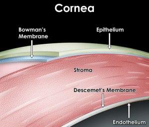 corneal-layers2